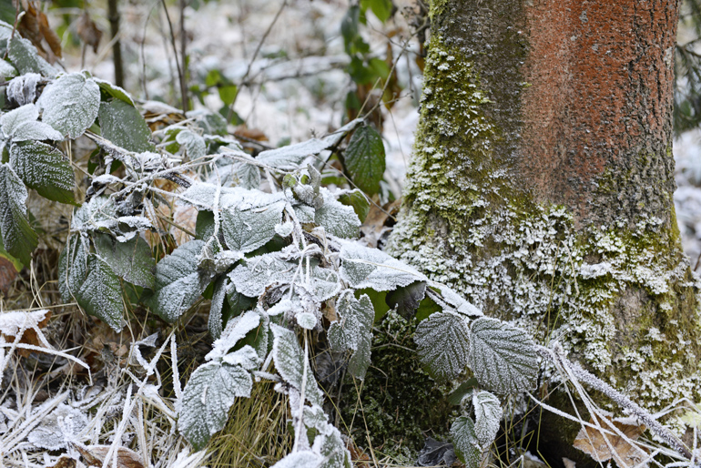 Wald_Winter_2016_WP